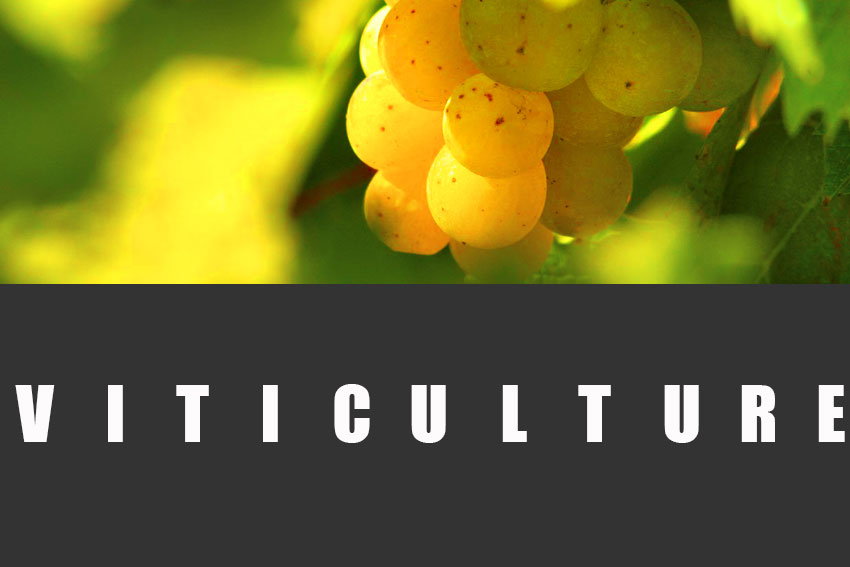 BandeauViticulture1